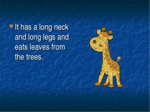 It has a long neck and long legs and eats leaves from the trees.