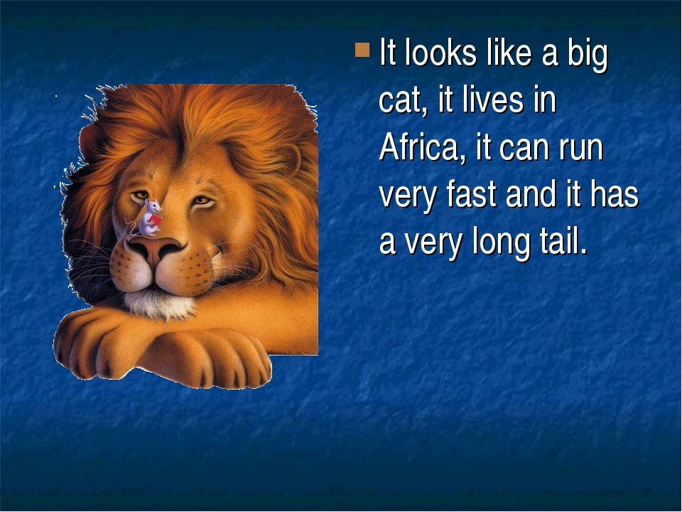 It looks like a big cat, it lives in Africa, it can run very fast and it has...