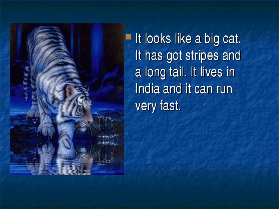It looks like a big cat. It has got stripes and a long tail. It lives in Indi...
