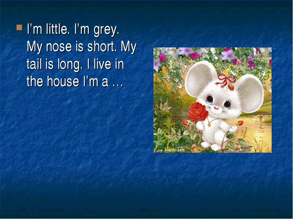 I'm little. I'm grey. My nose is short. My tail is long. I live in the house...
