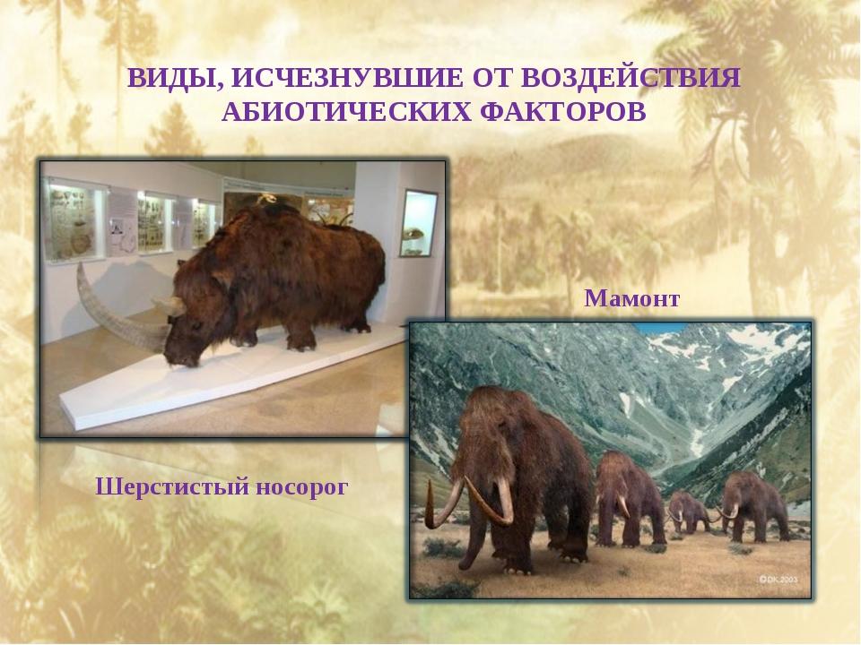 ВИДЫ, ИСЧЕЗНУВШИЕ ОТ ВОЗДЕЙСТВИЯ АБИОТИЧЕСКИХ ФАКТОРОВ Шерстистый носорог Мам...