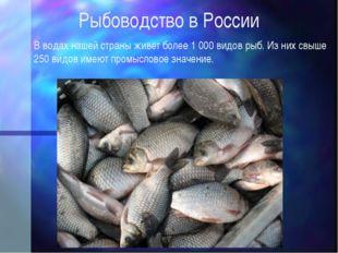 Рыбоводство в России В водах нашей страны живет более 1000 видов рыб. Из них