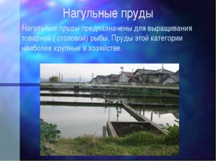 Нагульные пруды Нагульные пруды предназначены для выращивания товарной ( стол