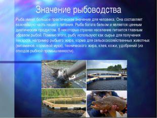 Значение рыбоводства Рыба имеет большое практическое значение для человека. О