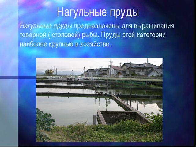Нагульные пруды Нагульные пруды предназначены для выращивания товарной ( стол...