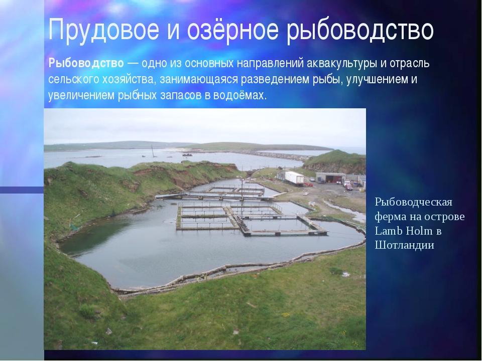 Прудовое и озёрное рыбоводство Рыбоводство — одно из основных направлений акв...