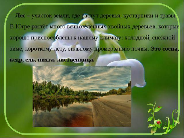 Лес – участок земли, где растут деревья, кустарники и травы. В Югре растёт м...