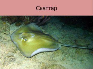 Скаттар