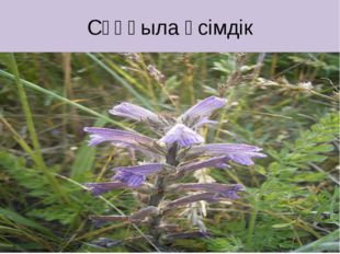 Сұңғыла өсімдік