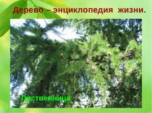Дерево – энциклопедия жизни. 1. В 1960 году в Сиэтле, близ Вашингтона, проход