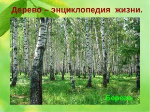 Дерево – энциклопедия жизни. 2. Это дерево бесспорно одно из самых красивых д
