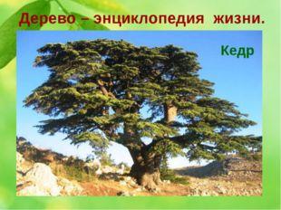 Дерево – энциклопедия жизни. 8. Это дерево считается деревом сюрпризов. Оно р