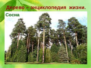 Дерево – энциклопедия жизни. 9. О каком дереве эта история. Это 300 лет назад