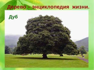 Дерево – энциклопедия жизни. 10. Это дерево считается священным для многих на