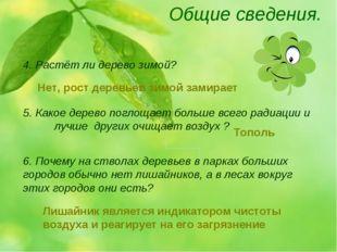 Общие сведения. 4. Растёт ли дерево зимой? 5. Какое дерево поглощает больше в