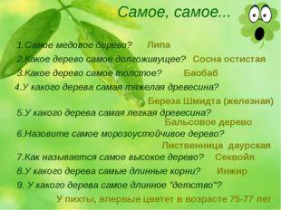 Самое, самое... 1.Самое медовое дерево? 2.Какое дерево самое долгоживущее? 3.