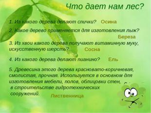 Что дает нам лес? 1. Из какого дерева делают спички? 2. Какое дерево применяе