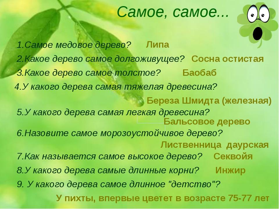 Самое, самое... 1.Самое медовое дерево? 2.Какое дерево самое долгоживущее? 3....