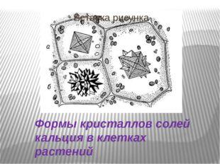 Формы кристаллов солей кальция в клетках растений