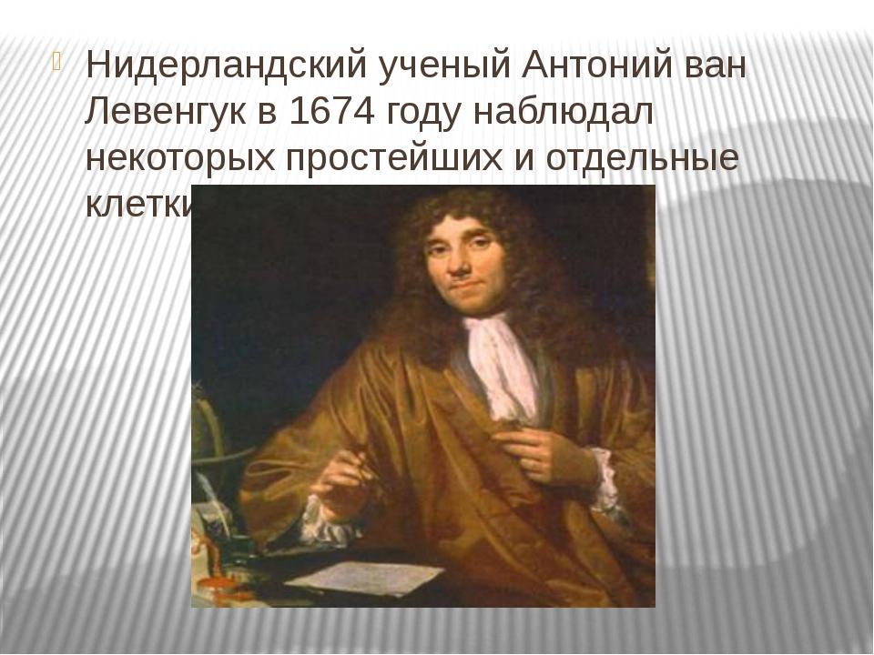 Нидерландский ученый Антоний ван Левенгук в 1674 году наблюдал некоторых прос...