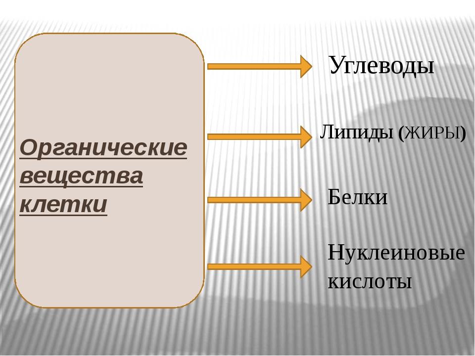 Органические вещества клетки Углеводы Липиды (ЖИРЫ) Белки Нуклеиновые кислоты