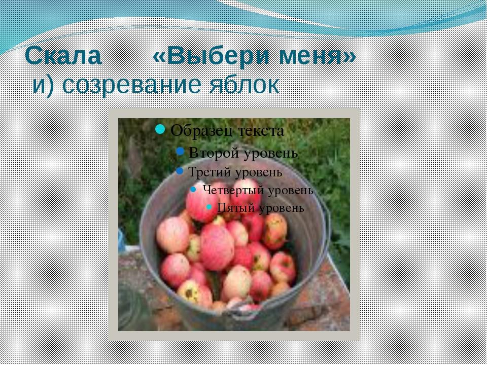 Скала «Выбери меня» и) созревание яблок