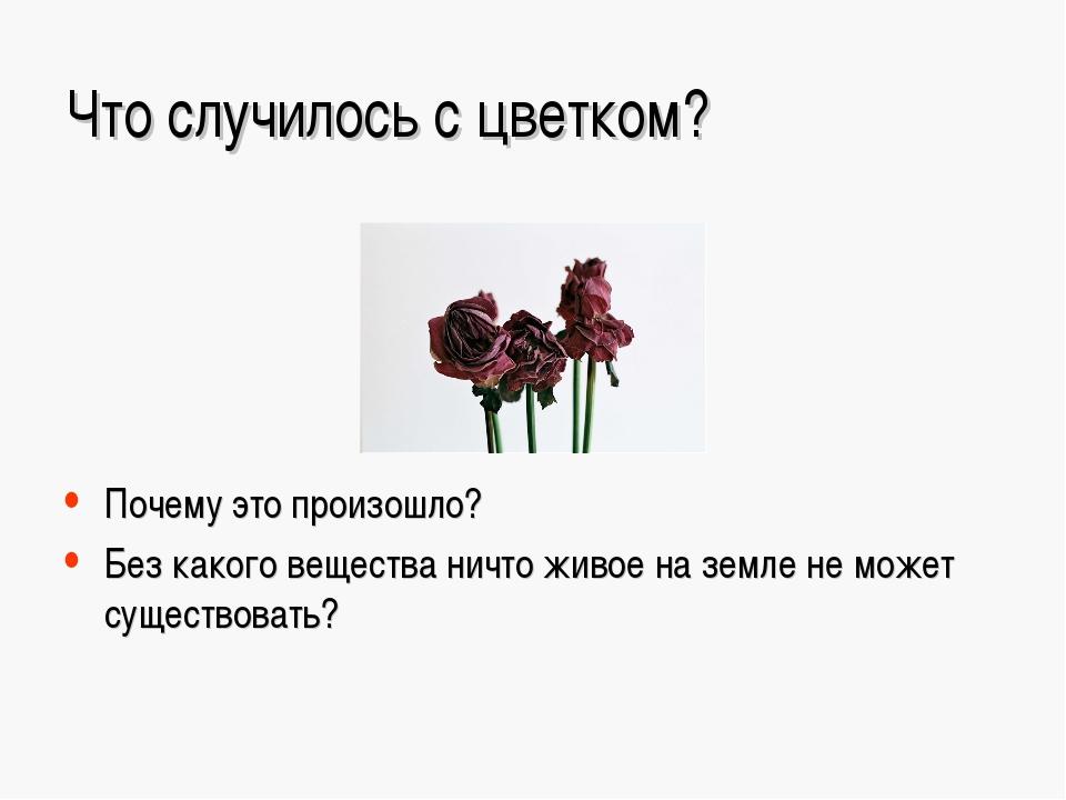 Что случилось с цветком? Почему это произошло? Без какого вещества ничто живо...