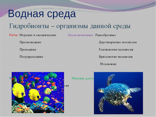 Водная среда Гидробионты – организмы данной среды Рыбы: Морские и океанически...