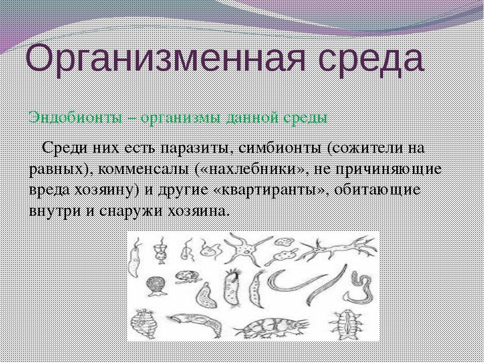 Организменная среда Эндобионты – организмы данной среды Среди них есть парази...