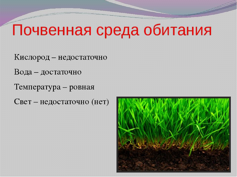 нее почва охрана почвы картинки приняла душ парнем