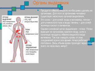 Органы выделения Продукты обмена веществ необходимо удалять из организма. Для