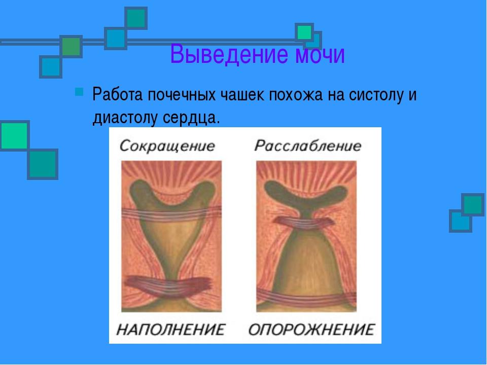 Выведение мочи Работа почечных чашек похожа на систолу и диастолу сердца.