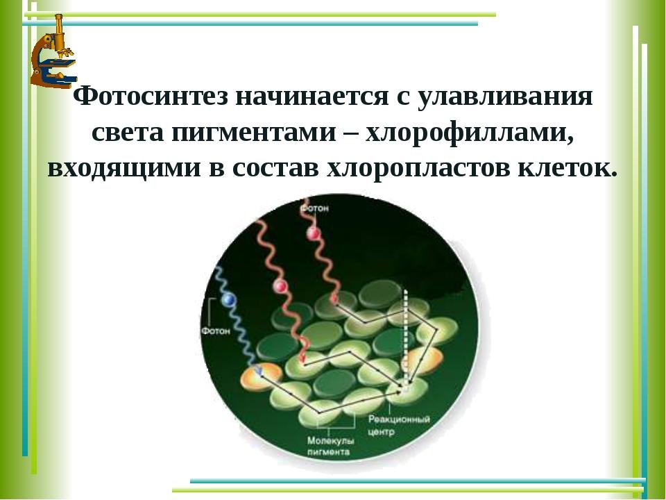 поглощение света фотосинтез
