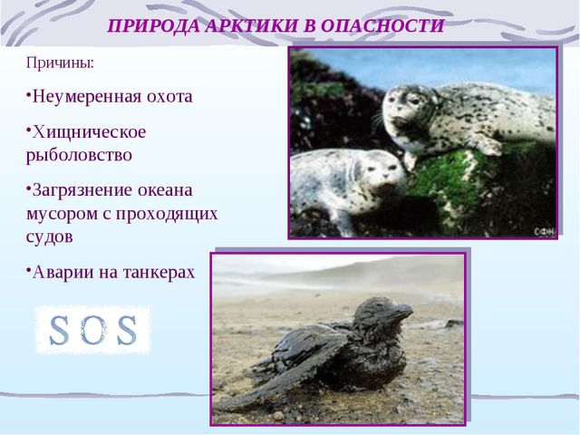 ПРИРОДА АРКТИКИ В ОПАСНОСТИ Причины: Неумеренная охота Хищническое рыболовств...