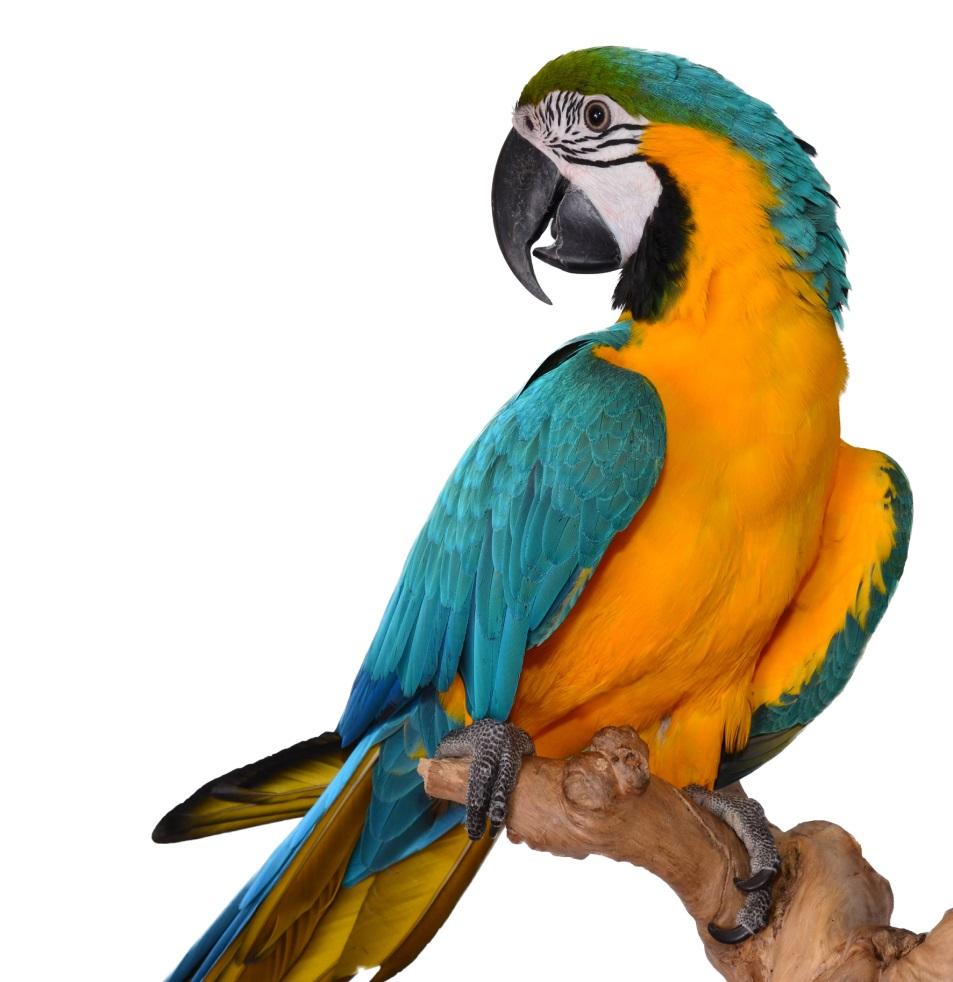 https://www.exoticdirect.co.uk/whitedragon/documents/image/Macaw%20Parrot.jpg