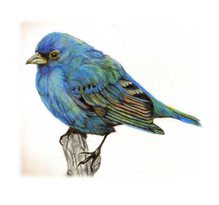http://pic.pilpix.com/9/9989/little-bluebird-of-happiness.jpg