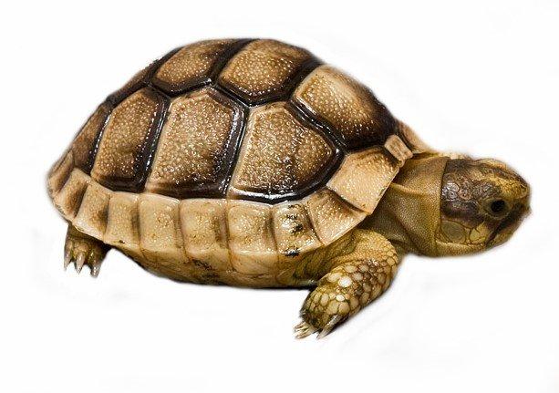 http://www.reptiles.swelluk.com/img/shop/original/swell_tortoise_kit.jpg