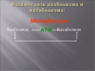 Анаболизм Катаболизм АТФ Метаболизм