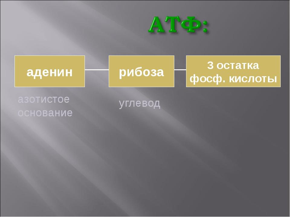 аденин рибоза 3 остатка фосф. кислоты азотистое основание углевод