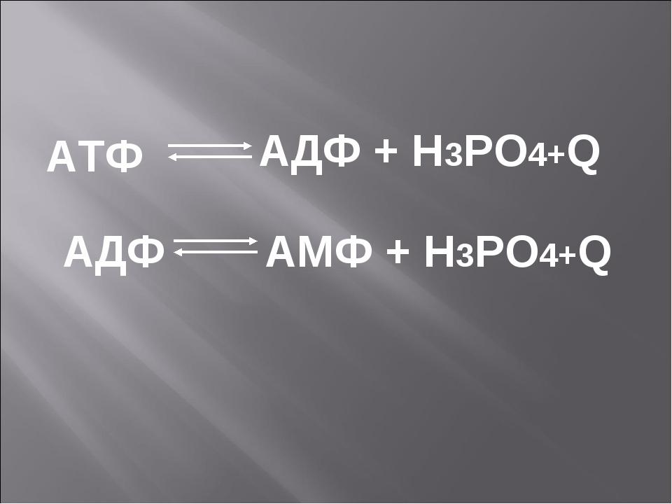 АДФ + Н3РО4+Q АМФ + Н3РО4+Q АТФ АДФ