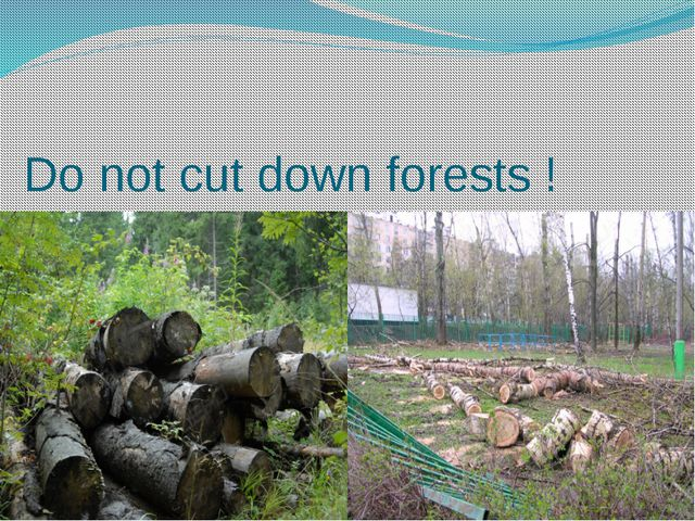 Do not cut down forests !