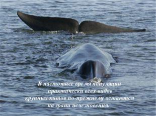 В настоящее время популяции практически всех видов крупных китов по-прежнему