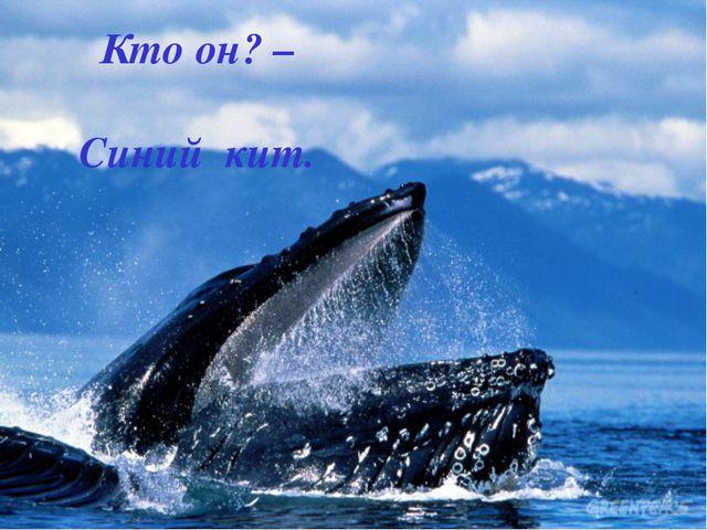 Кто он? – Синий кит.