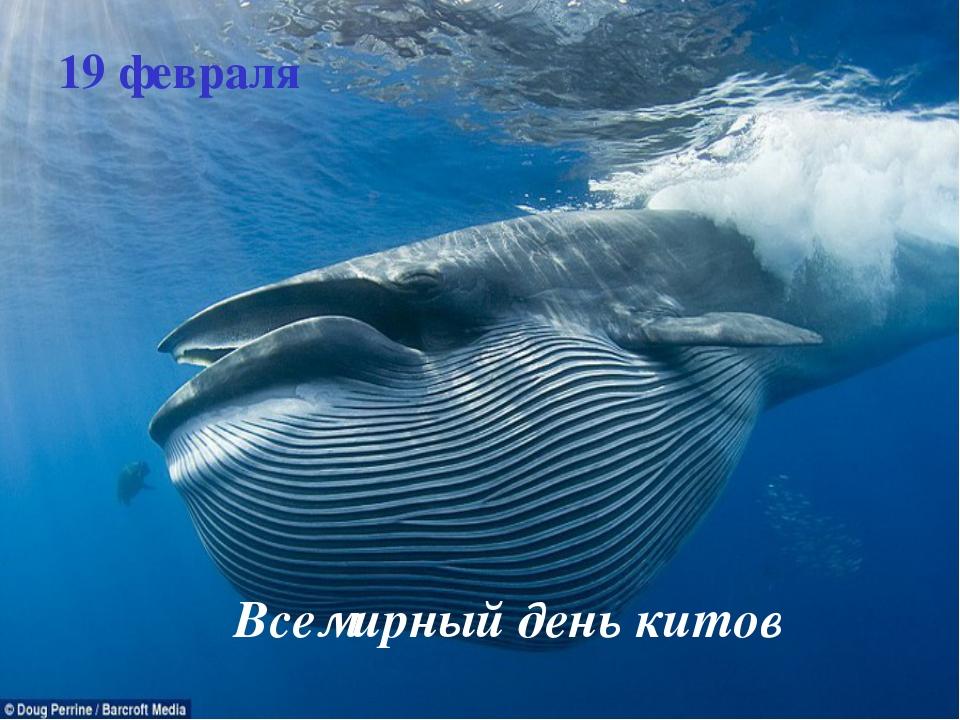 19 февраля Всемирный день китов
