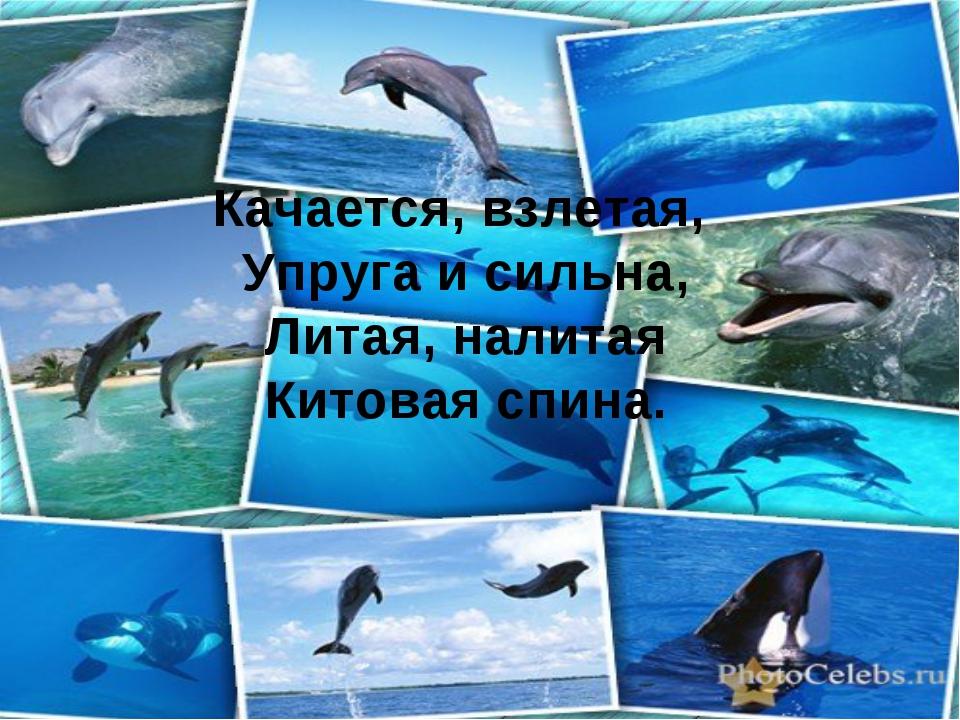 Качается, взлетая, Упруга и сильна, Литая, налитая Китовая спина.