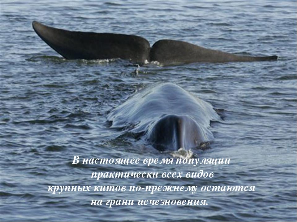 В настоящее время популяции практически всех видов крупных китов по-прежнему...