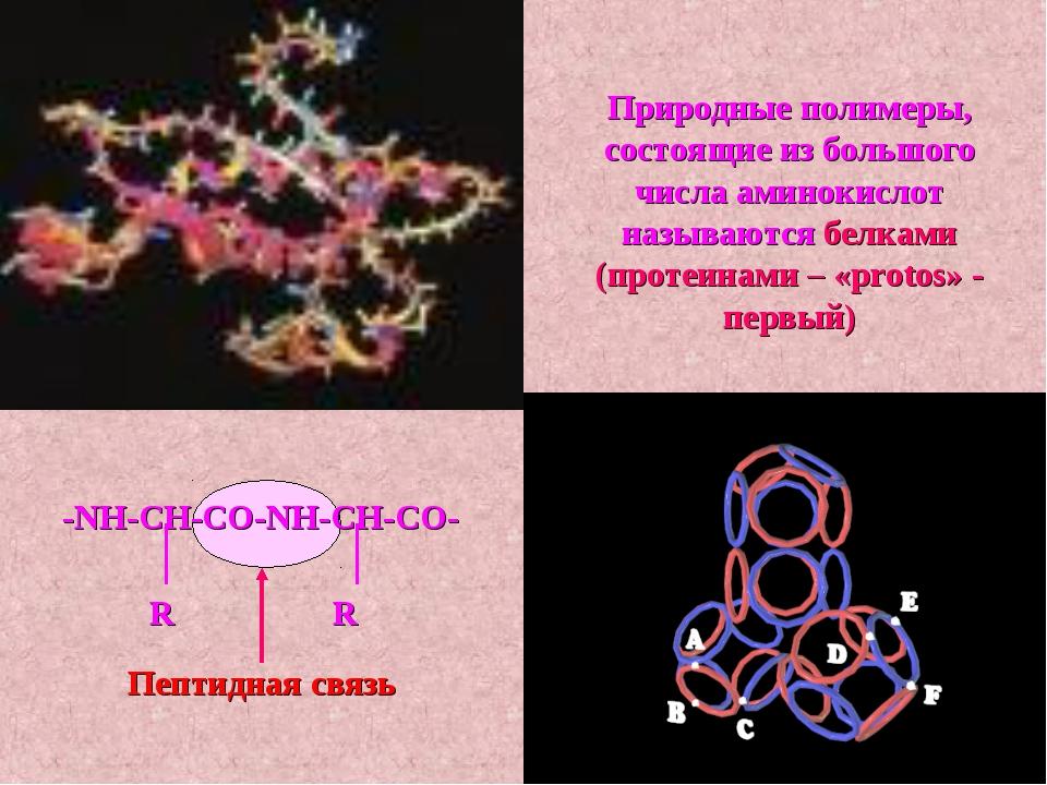 Природные полимеры, состоящие из большого числа аминокислот называются белкам...
