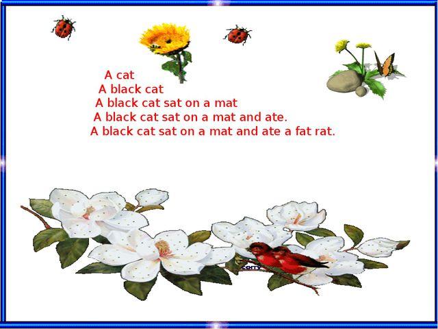 A cat                             A black cat...