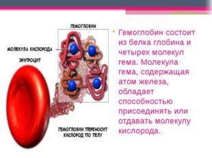 Гемоглобин состоит из белка глобина и четырех молекул гема. Молекула гема, с