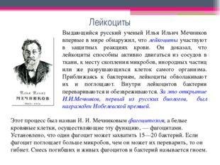 Лейкоциты Выдающийся русский ученый Илья Ильич Мечников впервые в мире обнару